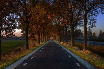 The road van Jolieke