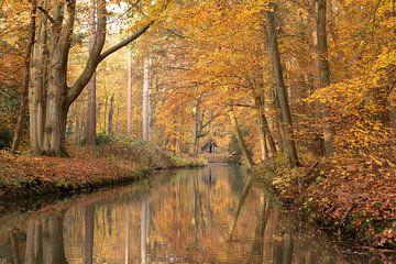 Hollands bospad in de herfst van Peter Haastrecht, van