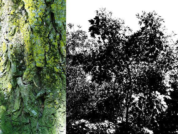 Tree Magic 38