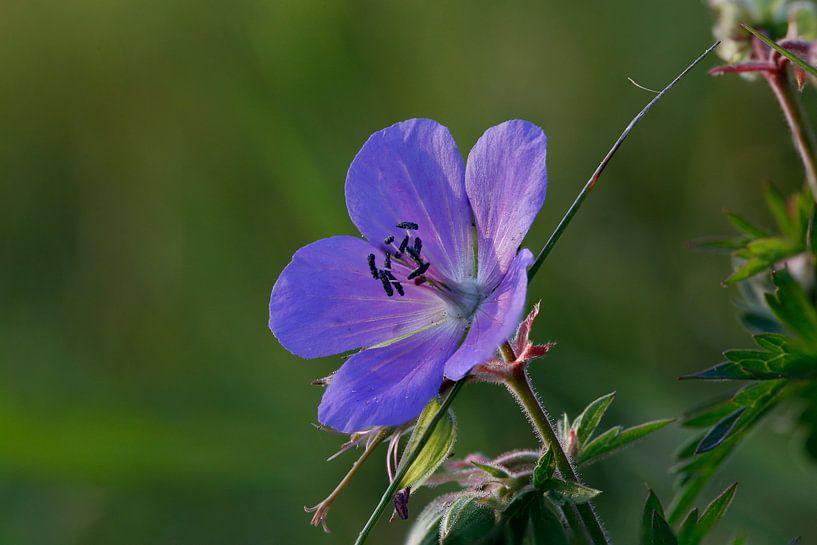 Blue Flower van Erich Werner