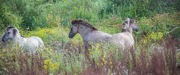Konik paarden in de wind van Ans Bastiaanssen