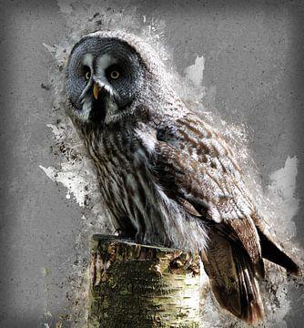 painting grey-owl-hs1655462 van H.m. Soetens