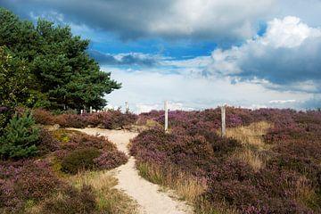 Naturschutzgebiet mit Moorlandschaft von Ivonne Wierink