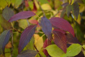 herfstkleuren van Carole Winchester