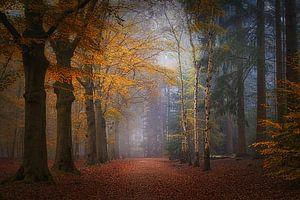 Mastbos . Mistige herfst foto . van Saskia Dingemans