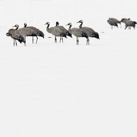 Kraanvogels in de sneeuw van Jaap La Brijn