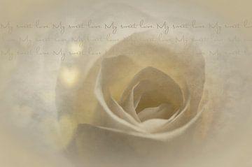 White Rose with text sur Ellen Driesse