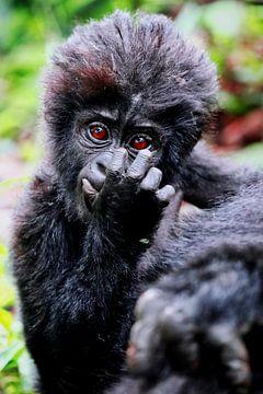 Jonge berggorilla, wilde dieren in Oeganda van W. Woyke