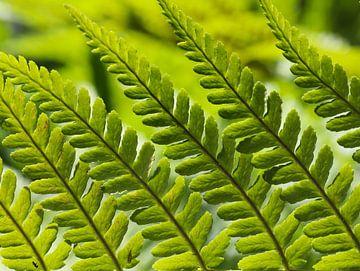 groene varen bladeren van Marieke Funke