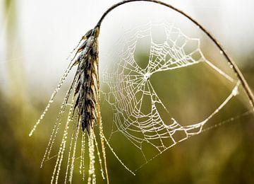 spinnenweb in ochtend dauw van Marjo Kusters