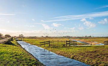 Gänse, die in einem niederländischen Polder wegfliegen. von Ruud Morijn