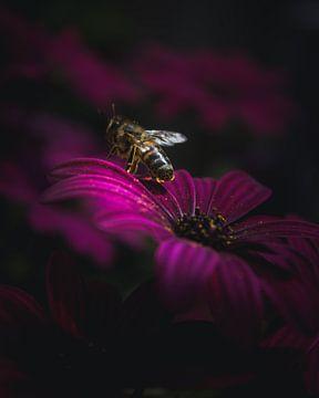 Flower bee van Sandra Hazes