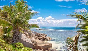 Tropisch strand met Palmbomen en Rotsen - Seychellen
