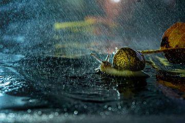 Slak in de regen op blad van Willian Goedhart