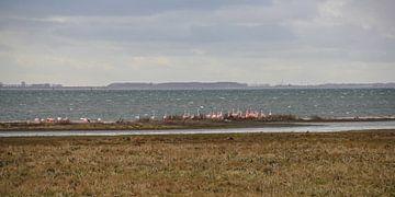Flamingo's 1  van Marloes van der Beek-Rietveld