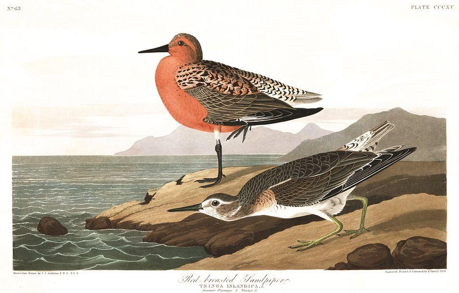 Kanoet van Birds of America