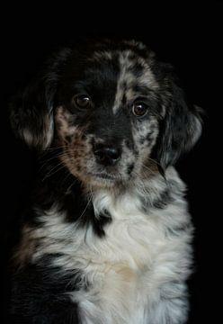 Puppy von Claudia Moeckel
