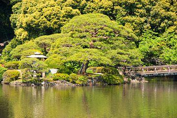 japan, yoyogipark tokyo van Mooi-foto van Well