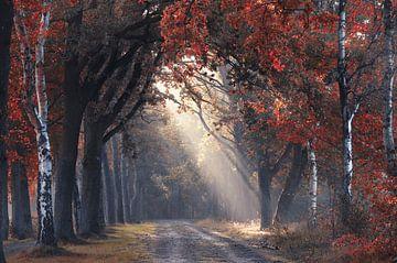 Blick durch den Herbst von Rob Visser