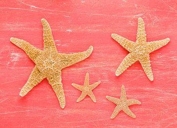 Vier Seesterneauf altes rot lackierte Brett von Wijnand Loven