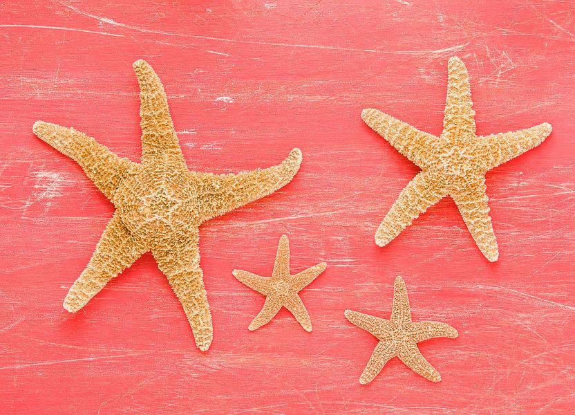 Vier zeesterren op een oude rode plank