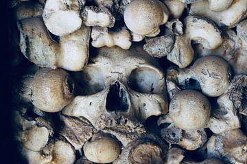 Schedel in Chapel of Bones van Steven van Dijk