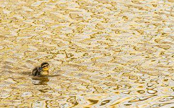 Junges Entenküken von Hennie Zeij