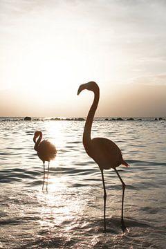 Flamingo's Bij Zonsondergang Op Aruba van Henrike Schenk