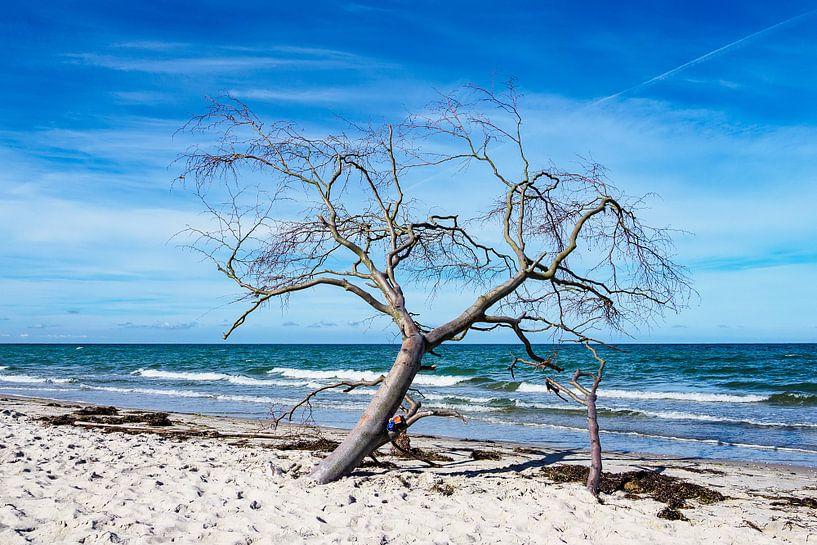 Tree on shore of the Baltic Sea van Rico Ködder