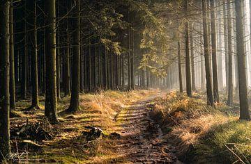 Wandelweg in laag zonlicht van Bart cocquart