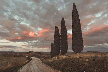 Une route de campagne sinueuse à côté de cyprès imposants en Toscane sur Besa Art
