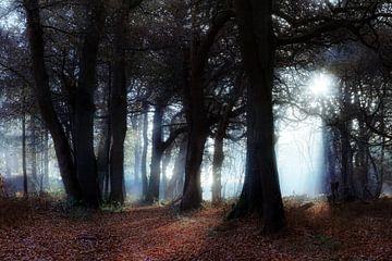 Blauw licht in het donkere bos van