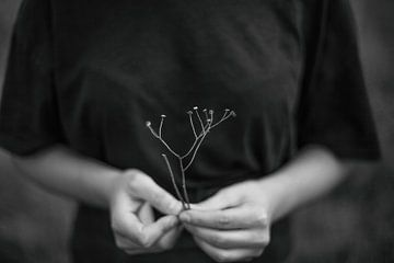 Nyctophylia von Melissa Van Belle