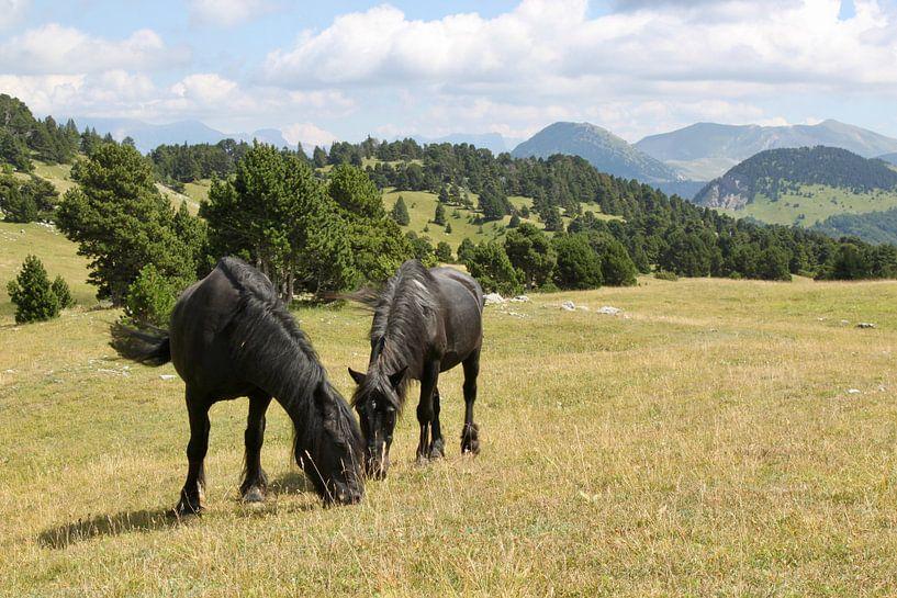 Pferde in den Bergen von Ruud Wijnands