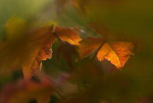 Herfstbladeren in het zonlicht. van