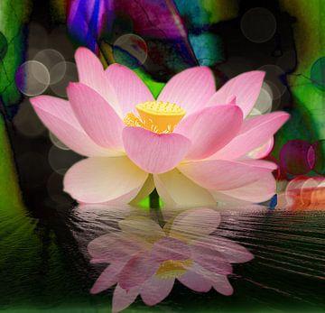 Spiegelung  Lotusblüte van