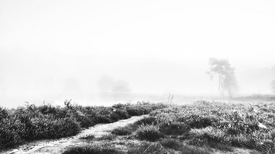 Misty morning van Lex Schulte