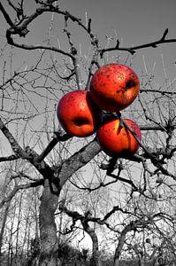 Appelsmoes van