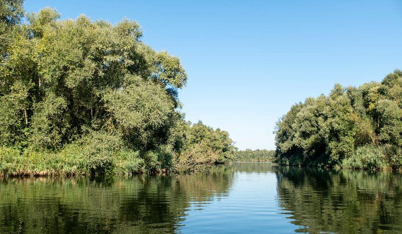 Nationaal park De Biesbosch van Sense Photography