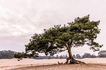 Vliegden op zandverstuiving van Mayra Pama-Luiten
