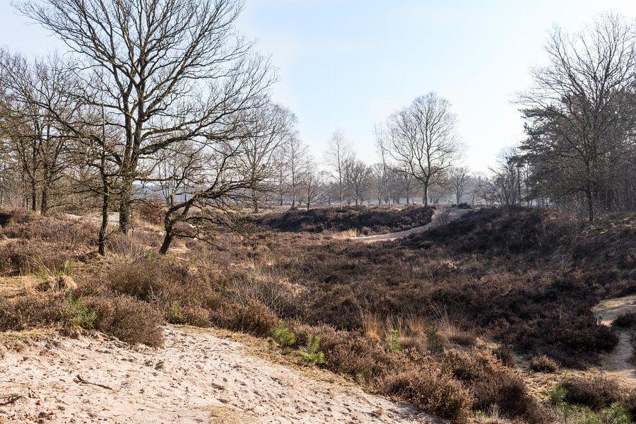 Natuurlandschap bij Lage Vuursche van Jaap Mulder