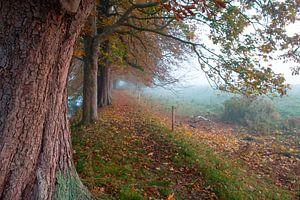 Mistig wandelpad onder oude kastanjebomen in herfsttooi van