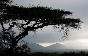 Uitzicht over Tsavo-West in de vroege ochtend. van Louis en Astrid Drent Fotografie