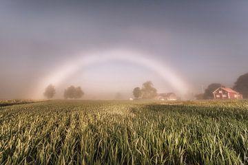 Weißer Regenbogen im Kornfeld von Marc Hollenberg