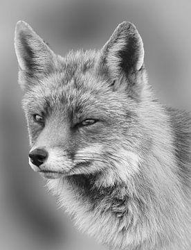 Portret van een vos in zwart wit van Marjolein van Middelkoop