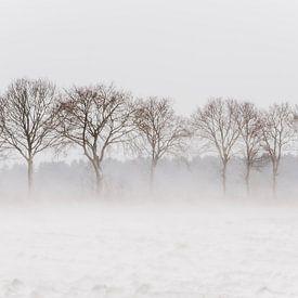 Bomen in stuivende sneeuw van Gonnie van de Schans