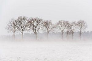 Bomen in stuivende sneeuw van