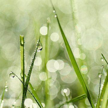 Dauwdruppels op het gras sur