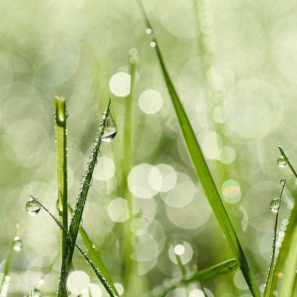 Dauwdruppels op het gras van Anouschka Hendriks