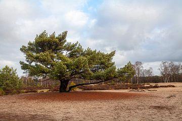 Kalmhoutse Heide van Nel Diepstraten